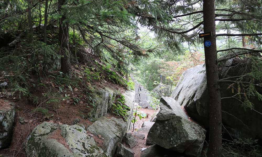 Trail on Crane Mountain